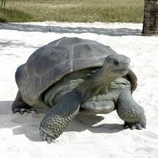 sea turtle garden ornament turtle