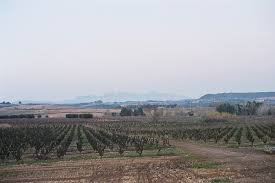 Conservation Vin Rouge Penedès Do U2014 Wikipédia