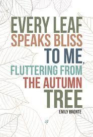 quotations for thanksgiving 238 best autumn thanksgiving halloween images on pinterest