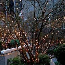 strings of lights make a garden magical