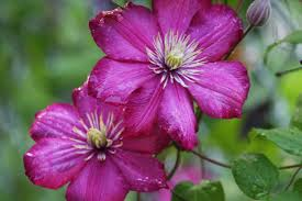 images of flowers blooming bbcpersian7 collections