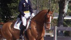 make your own dressage markers expert advice on horse care and