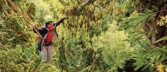 the new zealand tree project hamilton eventfinda