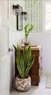 Best Plants For Bathroom Best 25 Bathroom Plants Ideas On Pinterest Best Bathroom Plants