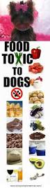 best 25 toxic foods for dogs ideas on pinterest good food for