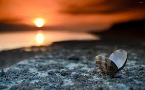 shell wallpaper shell on the beach wallpaper photography wallpapers 18471