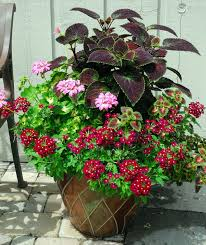 Plant Combination Ideas For Container Gardens - 1332 best container garden images on pinterest plants flower