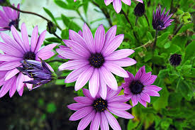 Types Of Garden Flowers Garden Flower Names Name That Flower Compare Prices On Garden