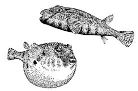 angel fish clipart free clipart images 2 clipartix