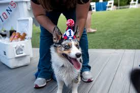 south florida australian shepherd club patriotic dog birthday party at orlando canine country club in