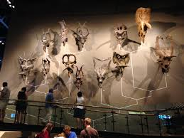 museum of ancient life thanksgiving point natural history museum of utah sauropod vertebra picture of the week