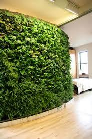 Interior Plant Wall Plant