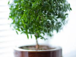 plantes dans la chambre mettre une plante dans sa chambre bonne ou mauvaise idée