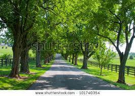 country road running through tree alley stock photo 101740354