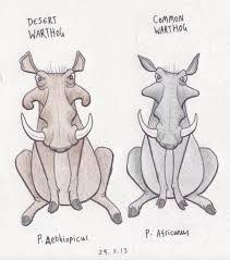 halo warthog drawing desert and common warthog by dark hyena on deviantart
