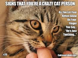 Crazy Cat Memes - crazy cat people catloversunite net part 3