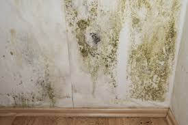 how do i prevent mold in my basement u2013 mold b gone