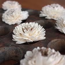 sola flowers dried flowers sola flower dahlias