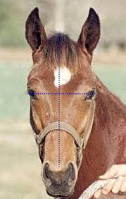 How To Tell If A Horse Is Blind Evaluating Horse Conformation Uga Cooperative Extension