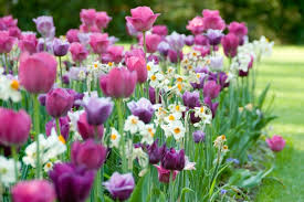 9 best flower bulbs for bouquets