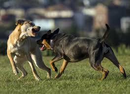 Dog Going Blind What To Do How To Teach Your Dog To Walk Nicely Petmd
