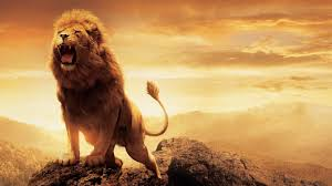 narnia lion aslan wallpapers hd wallpapers