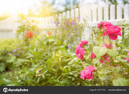 flowers and plants garden scene with flowers and plants in front of white wooden