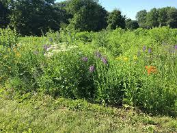 native prairie plants illinois prairie zones welcome to the jungle u2014 on the illinois campus