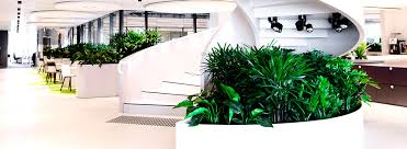 indoor plants and interior landscaping ambius