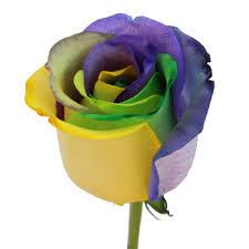 mardi gras roses gras rainbow roses