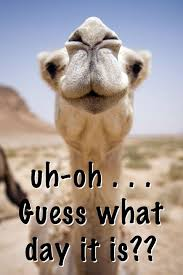 Happy Hump Day Memes - happy hump day quotes pinteres