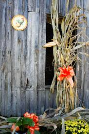 Corn Stalks And Bows The Side A Country Barn Stock Image