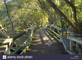 City Botanic Gardens Mangrove Boardwalk City Botanic Gardens Brisbane Queensland