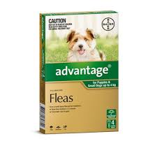 small house dogs advantage flea treatment for small dogs 0 4kg pack of 4 dog flea