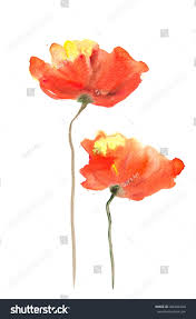 Color Painting by Acrylic Color Painting Orange Yellow Poppy Stock Illustration