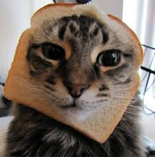Cat Toast Meme - the wang post cats vs food why not cats with food