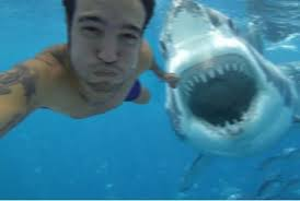 Shark Attack Meme - fact check man takes selfie moments before deadly shark attack
