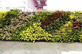 Garden Wall Systems by Greener Lifestyle With Elmich Green Wall System Elmich Global