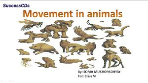 movement in animals class 6 science lesson ncert cbse lesson