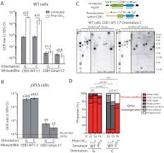 stimulation of gross chromosomal rearrangements by the human ceb1