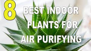 top 8 best indoor plants for air purifying youtube
