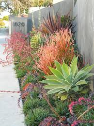 Drought Friendly Landscaping by 430 Best Drought Tolerant Gardens Images On Pinterest