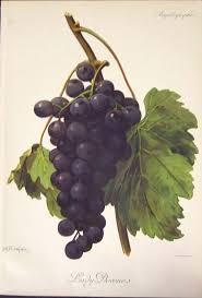 110 best wine me dine me grape decor images on pinterest
