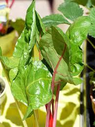 cuisiner les bettes comment cuisiner les blettes ou les bettes de votre panier bio amap