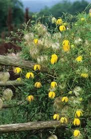 All Year Flowering Shrubs - 20 best elizabeth images on pinterest garden plants front