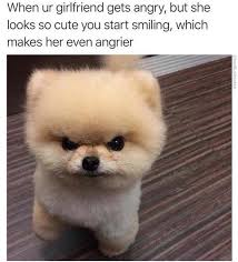 So Mad Meme - so cute but so angry funny memes daily lol pics
