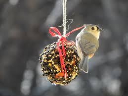 bird seed balls bird seed cylinders birdseed ornaments birdseed