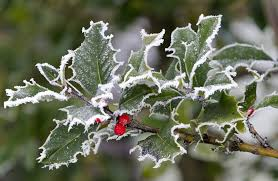 ornamental outdoor plants that can survive winter millcreek gardens