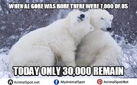 Funny Bear Meme - polar bear memes funny png