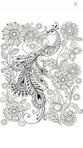 peacock coloring page for adults 5 31 color pages stencils